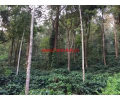 1 acre 7 gunta arebica coffee plantation for sale in chikmaglore