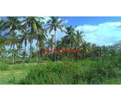 3.5 Acre Coconut Farm for sale at Banakanakere - Dabbegatta - Turvekere