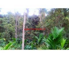 5.20 Acres Coffee Estate for sale near Kalasa - Chikkamagaluru