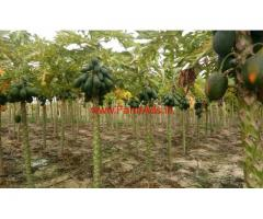 6.5 Acres Papaya and Mango  Farm for sale near Chitoor.