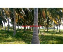 3.15 Acre Coconut Farm for sale at Tharuvai - Tirunelveli