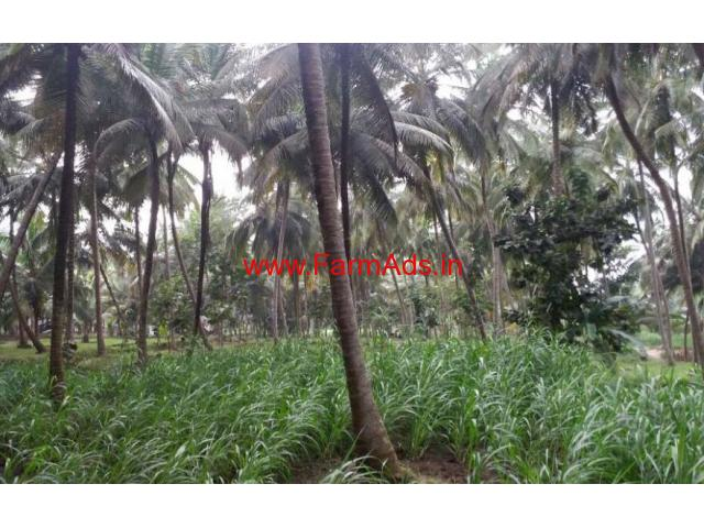 1.50 Acres High Yeilding Coconut Farm for sale at Chittur