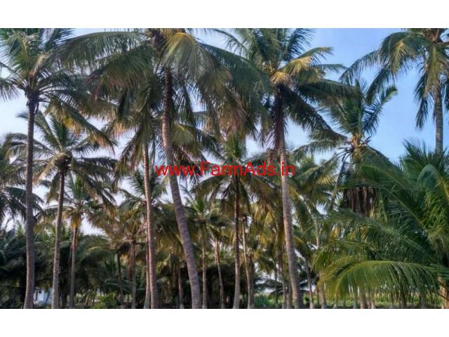 1.80 Acre Coconut Farm for sale near Udumalapati