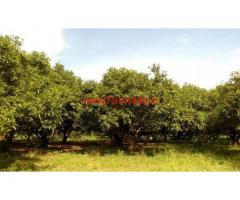 4 Acres Mango Farm for sale at Kothapalli - Wardhannapet - Warangal