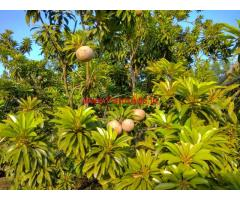 9 Acres Land near Goa and Belgaum giving minimum 5 lac income