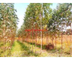 40 Acres Agriculture Land for sale Anantapur -Andhra
