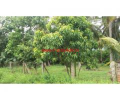 6 Acres Beautiful Farm land for sale at Chittur - Palakkad