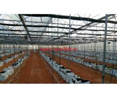 5 Units Green house in 4.5 Acres Farm land for sale at Kothakota Mandal