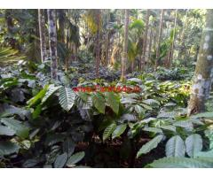 3.5 Acres Coffee Estate for sale at Mudigere - Chikkamagaluru