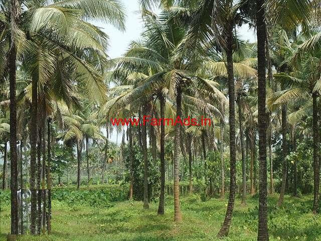 3.41 Acre Coconut Farm Land for sale near Manipal