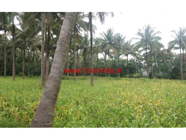 2.5 Acres Coconut Farm for sale at Chittur - Palakkad