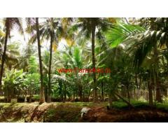 4 Acres Coconut Plantation for sale at Chittur - Palakkad