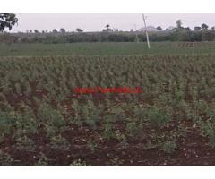 4 Acres Black Soil Agriculture land for sale at Raichur
