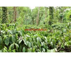 6 Acres Coffee Estate for sale at Shanivarsanthe - Sakleshpura