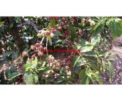 12 Acre Robusta Coffee Estate for sale at Keremakki - Chikmagalur