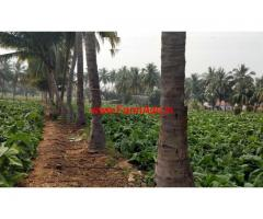 Agricultural land for sale - 11 acres in Sathyamangalam