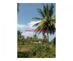 1.5 Acres Coconut Farm for sale 15 KMS from ring road, Mysore.