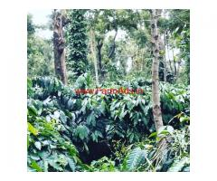 5.5 acre coffee estate for sale in mudigere, 8 KMs from Town