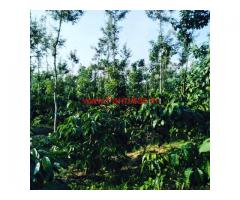 3 acre coffee estate for sale in mudigere , 10 km from city