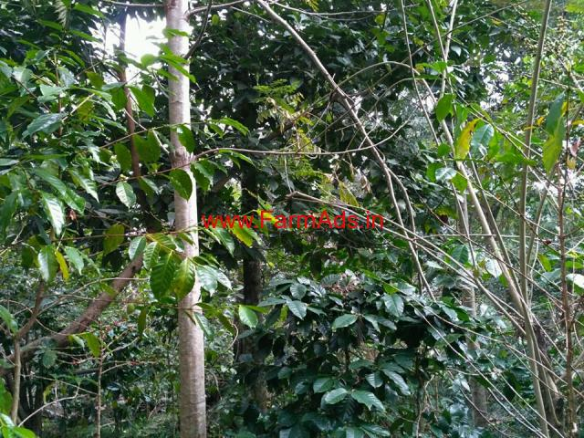 2 Acres Coffee Farm Land for sale at Kodaikanal Hills