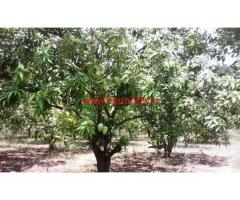 8 Acres farm land for sale at Obulapuram, Dhone Mandal.