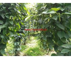 2 acer pepper plantation with house for sale at Idukki