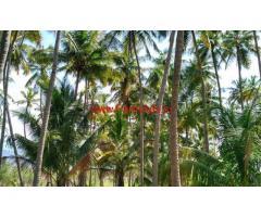 2.5 Acre Coconut Farm for sale at Ayyamalayam - Vathalakundu