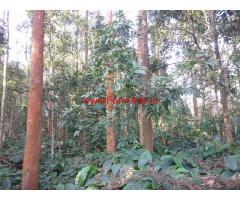 13.23 Acres Coffee Estate for saleat Chikmagalur