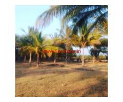 8 acre coconut plantation for sale in Tiptur, Tiptur - Hassan road.