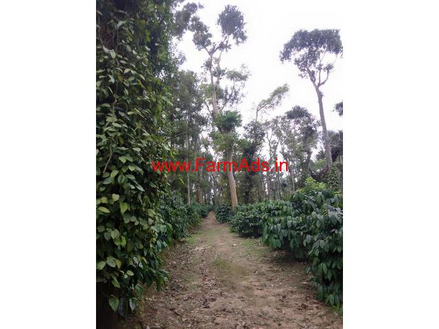13 Acres Coffee Estate for sale at Gullanpete - Chikmagalur