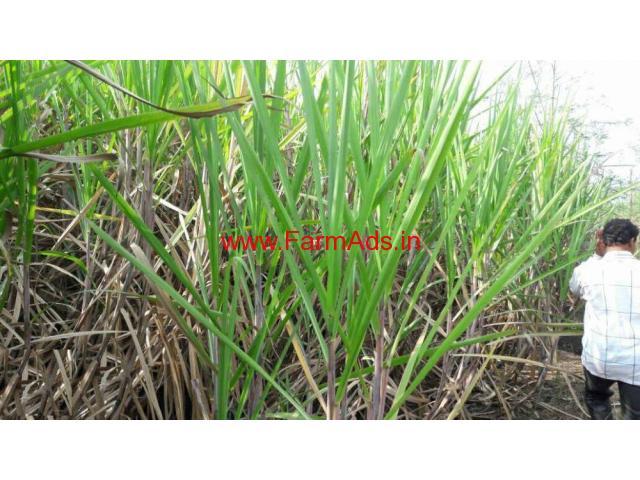 2.5 acre agriculture land for sale at Karad - Maharashtra