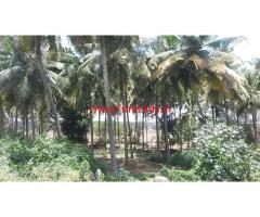 1 Acre Coconut Farm for sale at KRS road Bellagolla