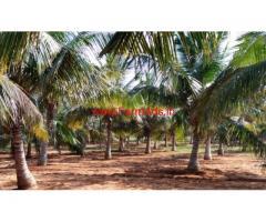 8 acre coconut farm sale in gudimangalam, 2 km from Pethapampatti