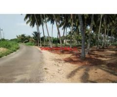 1.60 acre coconut farm sale in Periyapatti, near palladam - udumalpet road