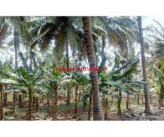 8 Acre Coconut farm for sale near kinathukadavu - Coimbatore