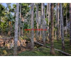 1 acre Arecanut plantation for sale in Arakalgod