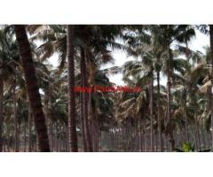 6 acre coconut farm sale in Senjerimalai, 47 KMS from Coimbatore