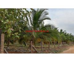 62 Acres Coconut Farm Land for sale at Dombucherry Theni