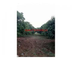 1.10 Acres Mango Farm for sale near Mysore on HD Kote Road