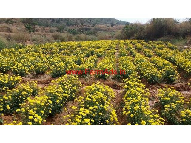 5 20 Acres Farm land for sale at Dharmapuri - TN Dharmapuri