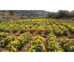 5.20 Acres Farm land for sale at Dharmapuri - TN