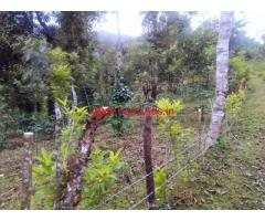 8 Acre Coffee Estate for sale 10 KMS from Kalasa