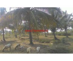 1.10 Acre Coconut Farm for sale near Nagamangala