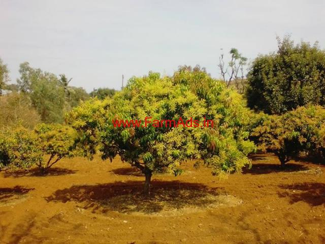 1 acre 20 gunta mango farm land for sale near chanapatna