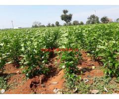 1 Acre Agriculture land for sale on Kanakapura to Malvalli main road
