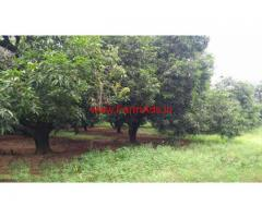 8.5 Acres Mango Farm Land for sale at Chittoor in Andhra