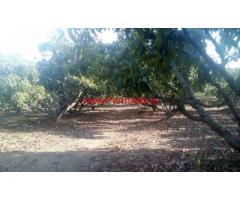 1.20 Mango Farm for sale at Chittur - Palakkad