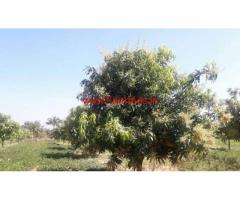 20 acre Mango groove is available for sale in Nimmanapalli - Chitoor