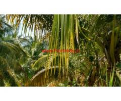 6 Acre Coconut farms for sale in near vadipatti, Madurai
