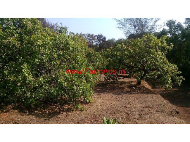 30 acre agriculture land for sale near tadri sea port in kumta taluk